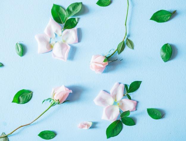 花の組成。青色の背景にピンクのバラの花