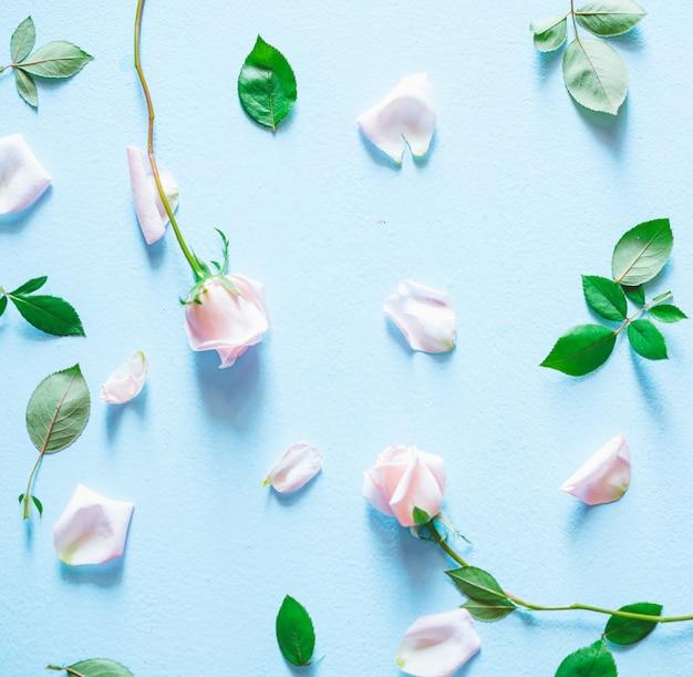 花の組成。青色の背景にピンクのバラの花。上面図。