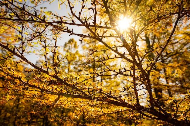 青い空と秋の季節に美しい赤いカエデを通して日光
