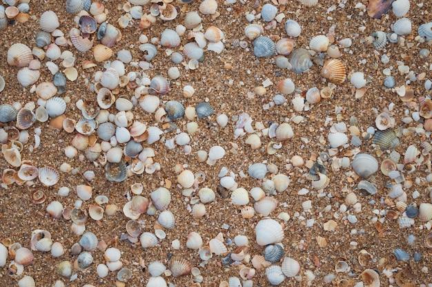 海の貝殻と砂のテクスチャ