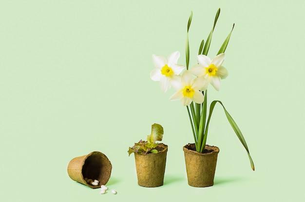 泥炭ポットで成長する花、野菜、ハーブ、種子。春のガーデニング。品種の植物。