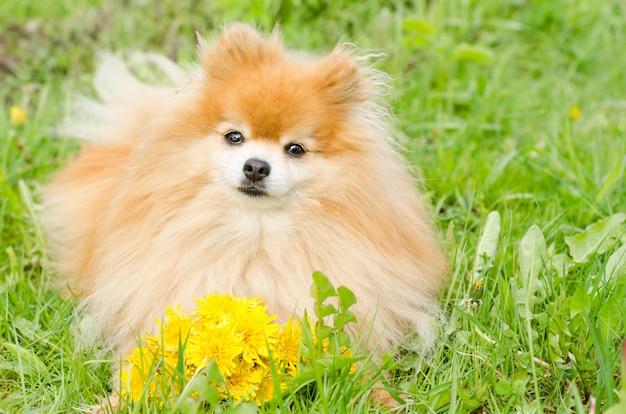 Собака с букетом цветов на зеленом