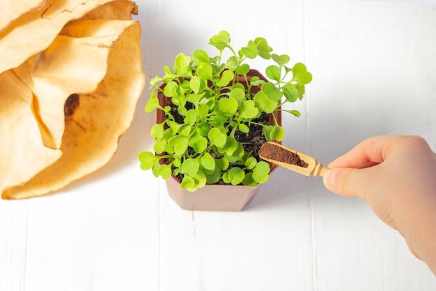 Переработка отходов от молотого кофе. используемые кофейные гущи как удобрения микро зелень в горшке на белом фоне деревянные. нулевые отходы, экологичность, разумная концепция потребления