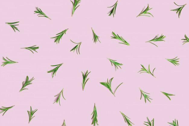 ピンクのパステル調の背景にレイアウトされた新鮮な緑の有機ローズマリーの小枝