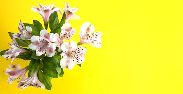 黄色の背景に淡いピンクの天文学者の花束。コピースペース