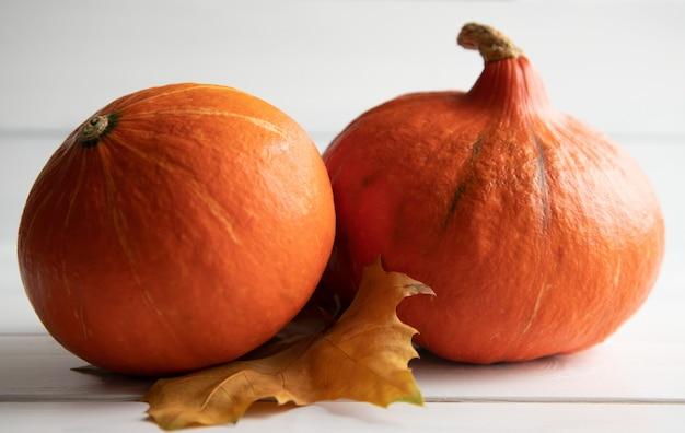 Две свежие оранжевые тыквы хоккайдо с пожелтевшим осенним кленовым листом