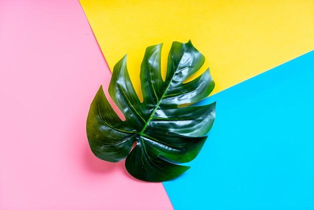 カラフルな背景を持つ熱帯のヤシの葉