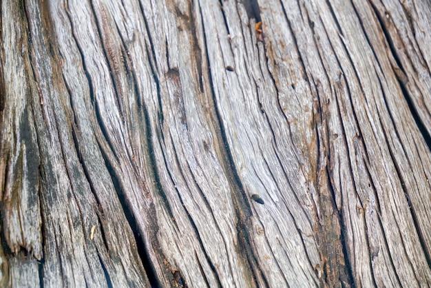 木の幹の質感と詳細