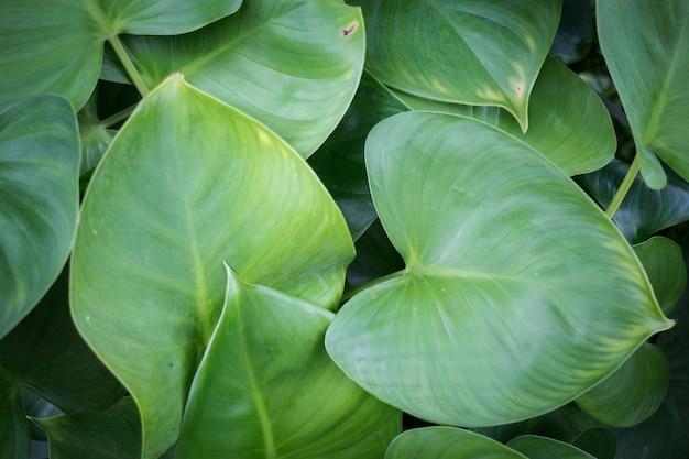 トロピカルガーデンの緑のジャングルの葉