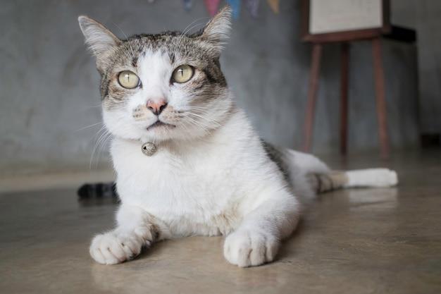Ленивый кот остыл на полу