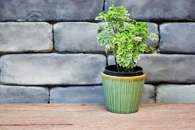 ミニ青葉植木鉢