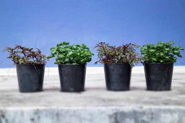 ミニ植木鉢の性質