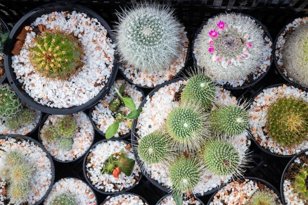 ウィンドウショッピングでサボテンの植木鉢