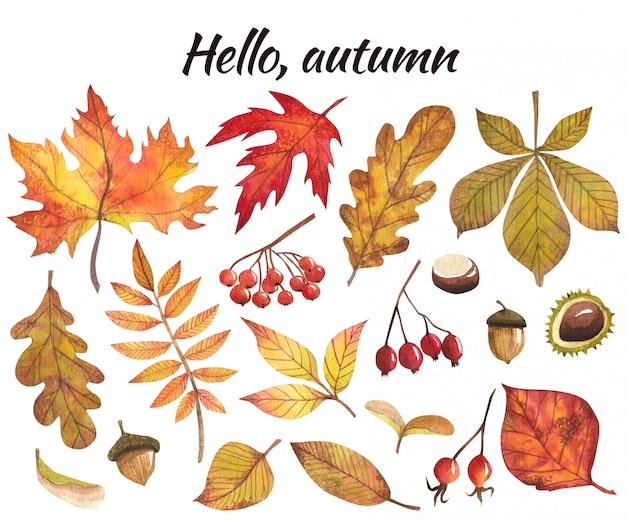 秋の紅葉と果物、分離イメージ入り水彩画