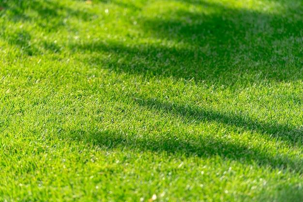 緑の夏の草、草フィールドのテクスチャ、木のシルエット、背景に抽象的な影