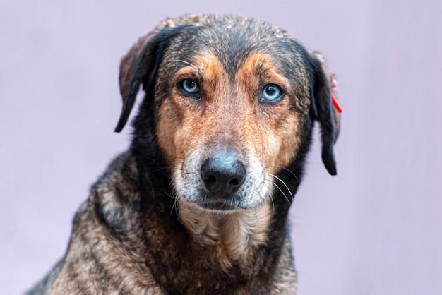 カメラの前でホームレスの犬、路上で座っているホームレスの犬