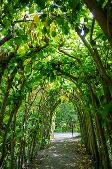 Зеленая природная арка в парке стокгольма