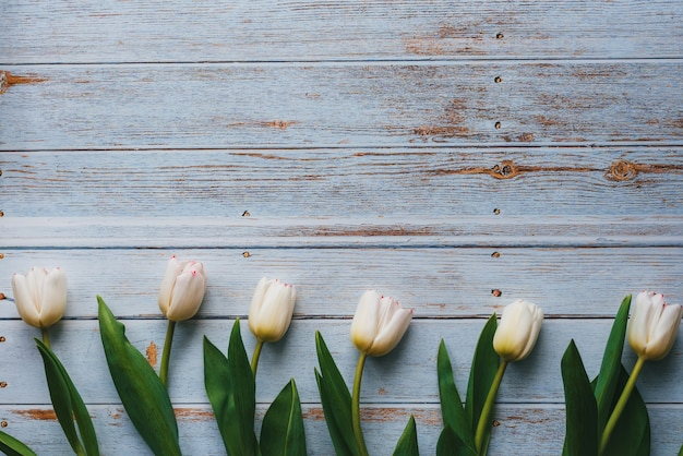 Белые тюльпаны на деревянных синем фоне. плоская планировка, вид сверху с копией пространства