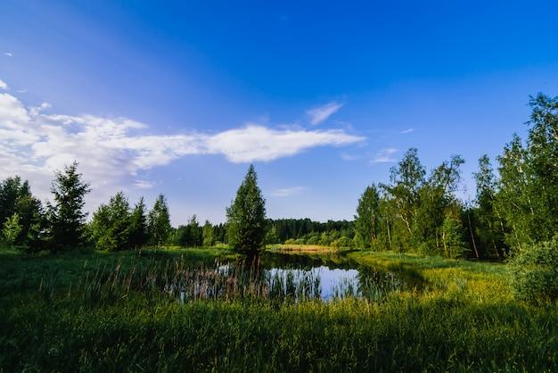 森の緑の野原の真ん中に池のある自然な夏の風景