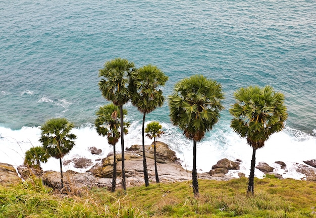 Сахарные пальмы андаманского моря, пхукет, таиланд.