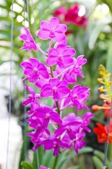 庭の美しい紫色のラン