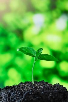 成長する植物、朝の光で育つ苗