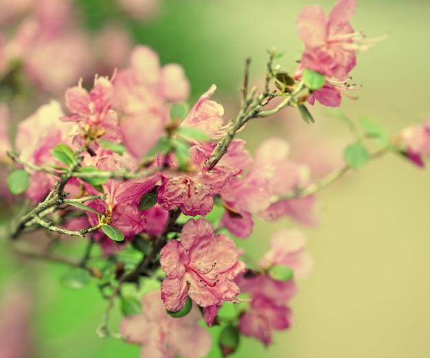 Красивые розовые цветы в саду