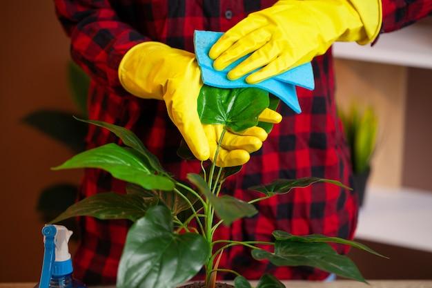 Женщина ухаживает за растениями на рабочем месте в офисе