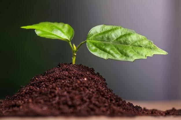 土壌から成長している緑の苗のクローズアップ