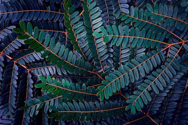 Темно-зеленый лист текстуры фона