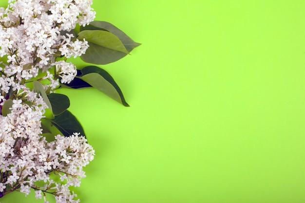 明るい緑の背景の上面に白い咲くライラックの枝