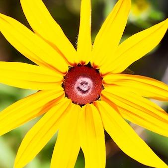 Желтый цветок макро