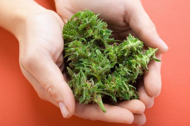 女性はオレンジ色の背景に手で大麻の芽を保持している概念:がんのマリファナ治療
