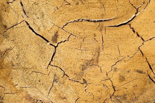 ひびの入った乾燥オークテクスチャオークの切り株の背景