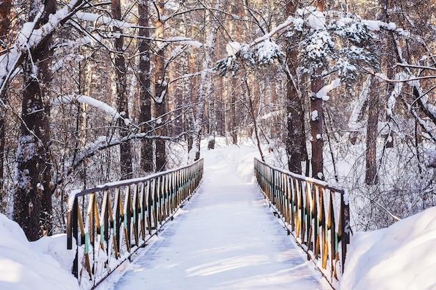 Мост в сосновом лесу зимой