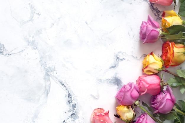 Фиолетовые и желтые розы на белом фоне