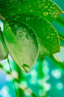 Капли воды на листьях, крупный план