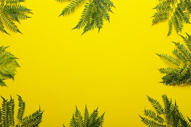 Джакарандские ветви