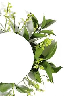緑の枝と葉と白い壁のテキストの白い丸い場所。