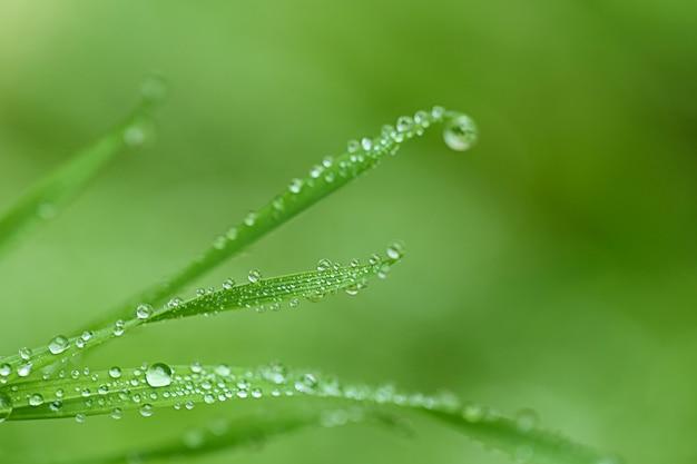 Естественный травяной фон с каплями воды