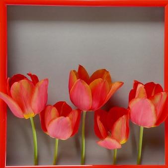 花のフレーム。花カード。灰色の背景に赤枠に赤いチューリップ。母の日。国際婦人デー。