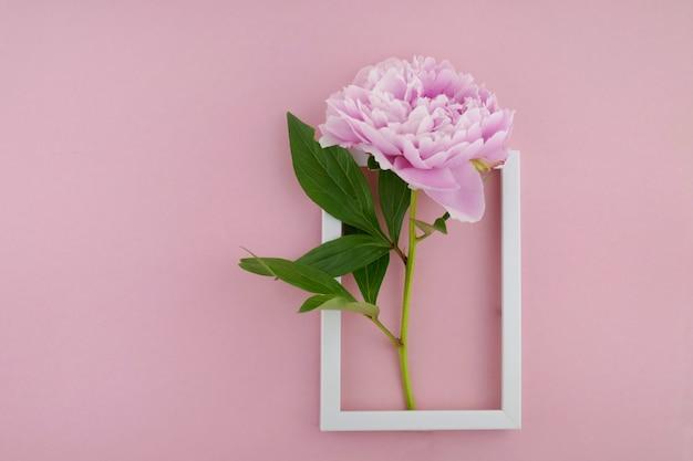 明るいピンクのパステル調の背景に白いフレームで葉を持つテリー牡丹