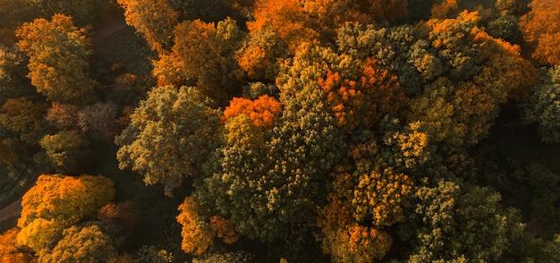 秋の森の風景空中ドローンビュー。カラフルな秋の風景
