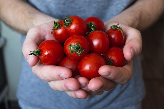 Свежие домашние помидоры черри в руках.