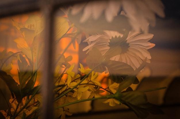 霧とデイジーの花