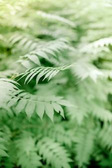 春、自然の季節の抽象的な花の背景の菜種イエローグリーンフィールド