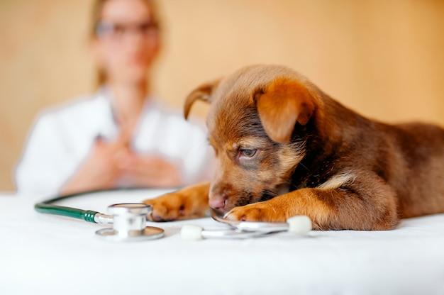 Ветеринарный