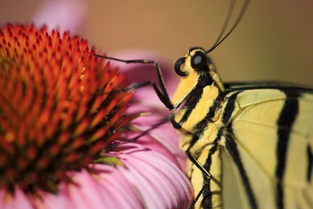 マクロ蝶の目と花
