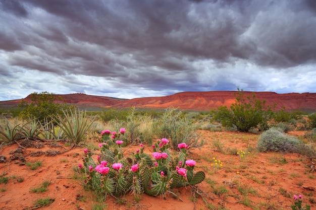 Живописный пейзаж с облаками и кактусом в штате юта