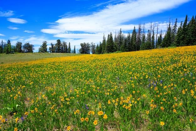 Луг с желтыми полевыми цветами на кедровых бревнах